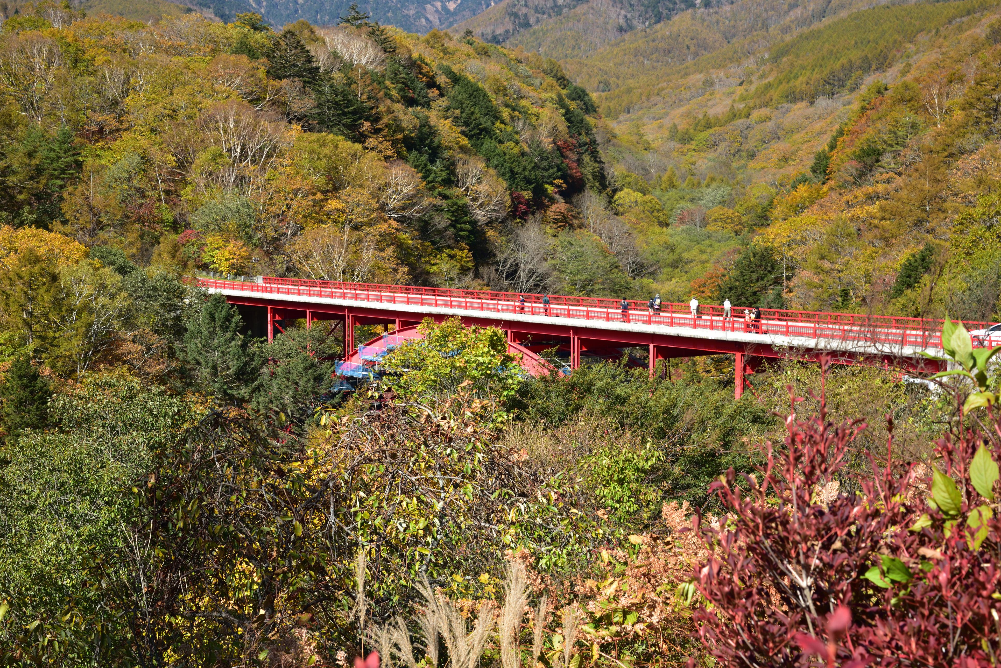 view of the red higashizawa bridge in autumn
