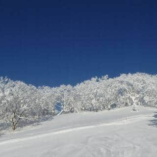 Where to Experience the Best Powder Snow in Japan (and Why You Should Visit in the Warmer Seasons too)