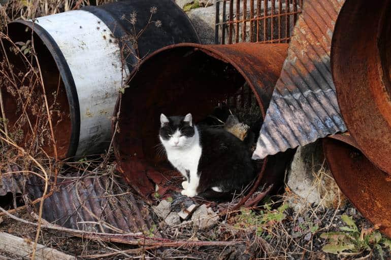 Tashirojima Cat Accommodation