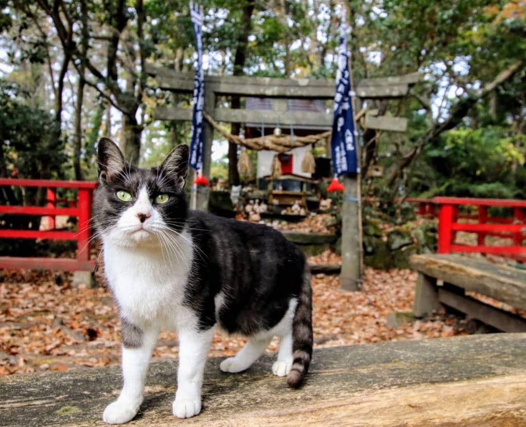 Tashirojima Cat Shrine
