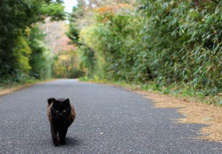 Tashirojima Cat Guide