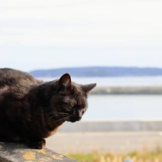 Tashirojima Cat Island