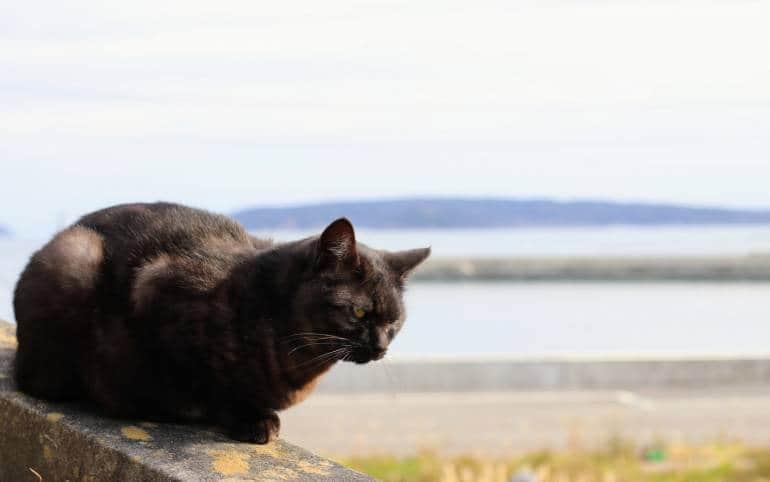 Tashirojima Cat on a Wall