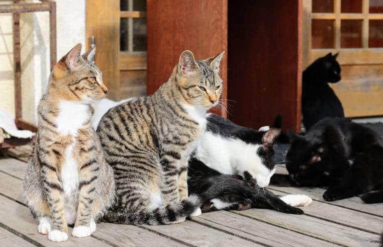 Tashirojima Cats Cats Cats