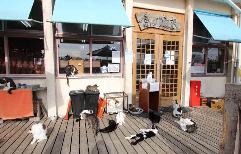 Tashirojima Rest Stop Shima no Eki Cats