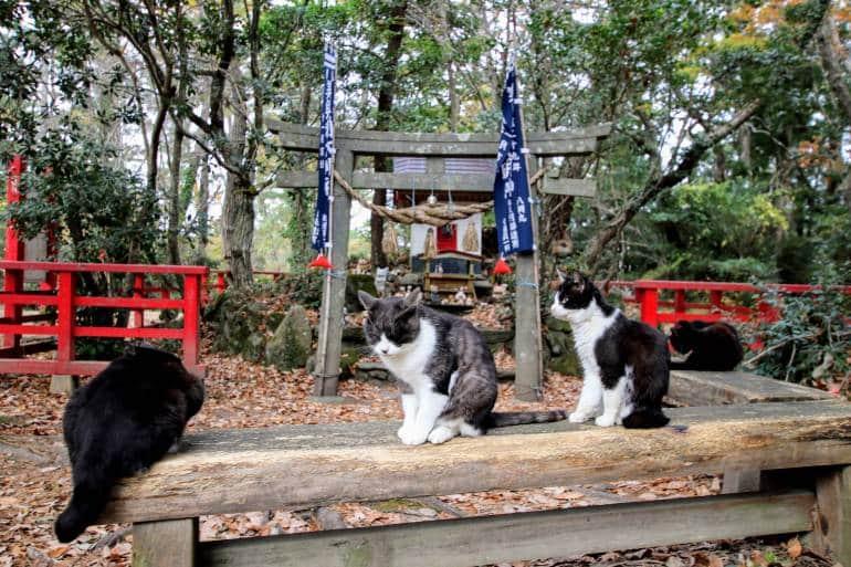 Tashirojima Shrine with cats