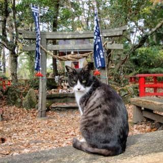 Miyori Shrine (Cat Shrine)