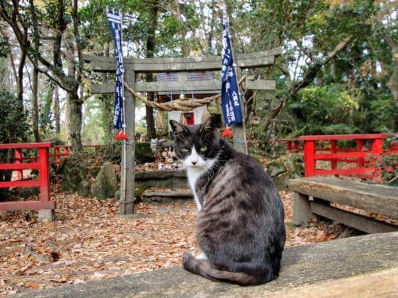 Tashirojima shrine with cat