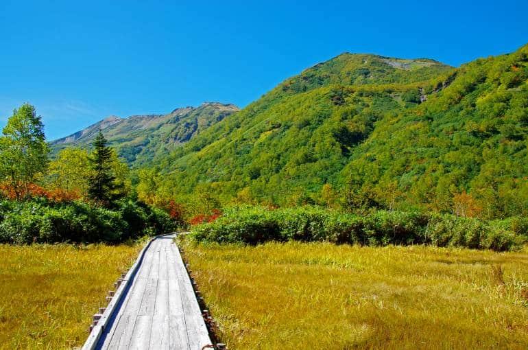 pathway through Tsugaike natural garden