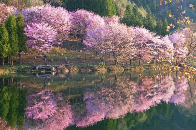 lake-nakatsuna-spring-cherry-blossoms hakuba