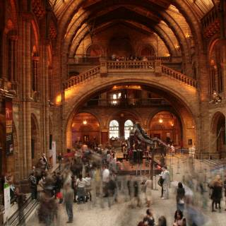 Natural History Museum Lates