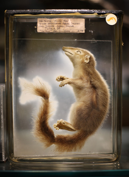 The Grant Museum of Zoology in University College London houses some intriguing natural history specimens