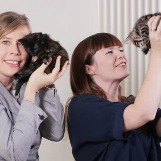 Love Cats? Meet Cat Sitting Community Cat In A Flat