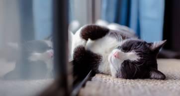 cat in a flat cat sitting