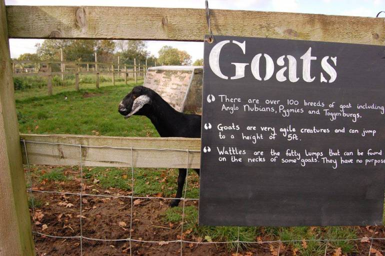 A goat on a farm with a sign on the gate
