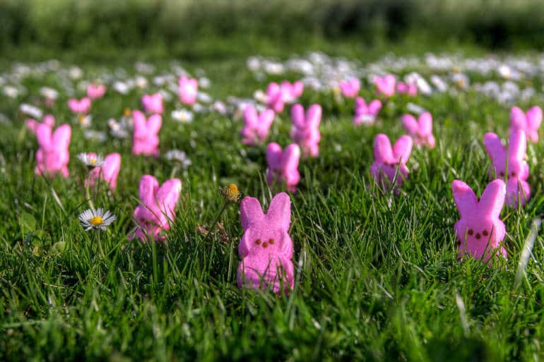 a field full of small chocolate Easter bunnies