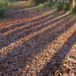 ashridge estate fall day trips from london