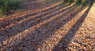 ashridge estate fall day trips from london