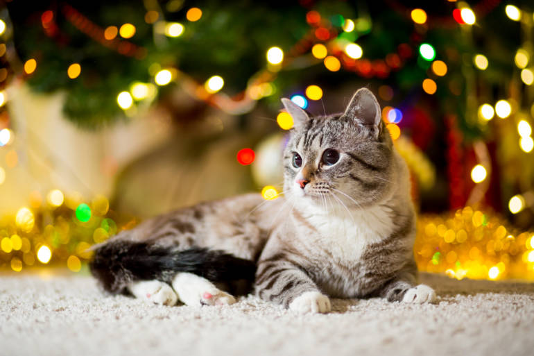 Christmas Jobs London Petsitting