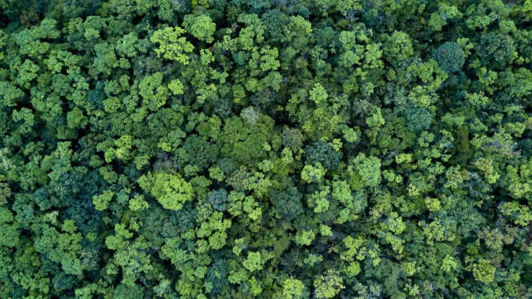 Trees, Forest, Woods, Carbon offset