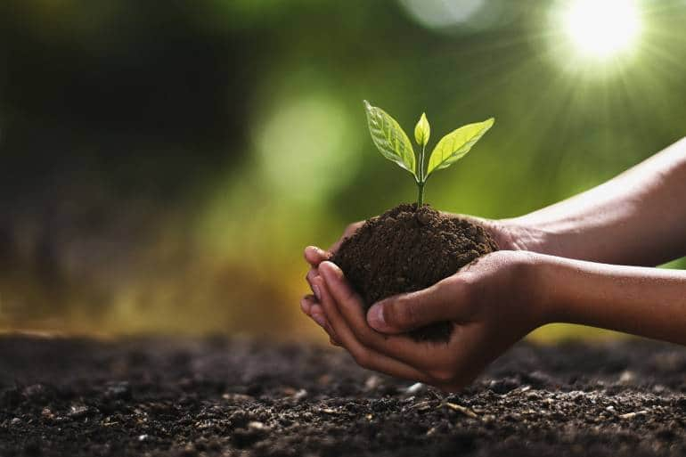 Tree planting stock images