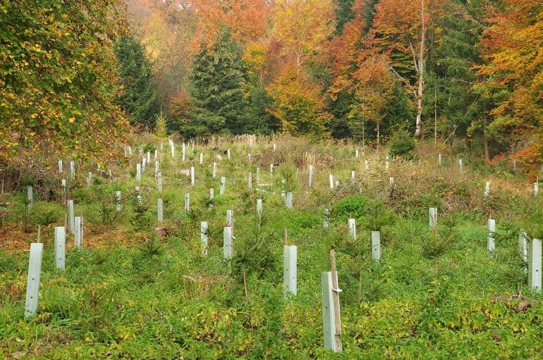 Carbon capture reforestation