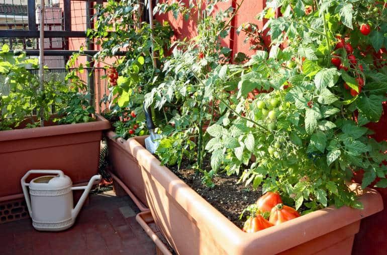 London urban gardening