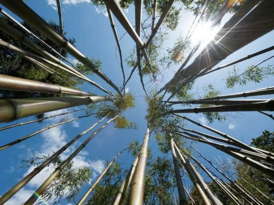 Bamboo Garden at Kew Gardens.