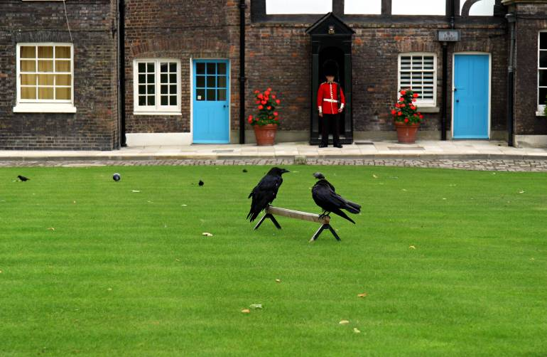 The Ravens at the Tower of London with Royal Guard in background.