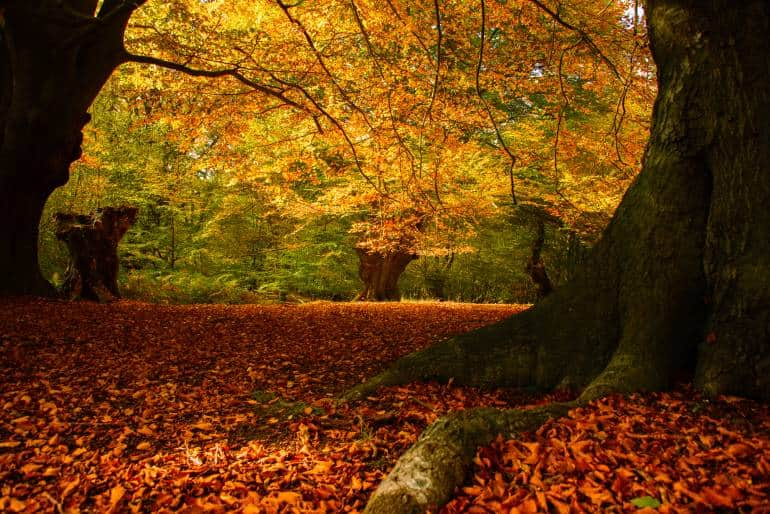 Forest blanketed with Autumn-coloured leaves