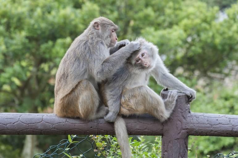 Monkeys in Hong Kong