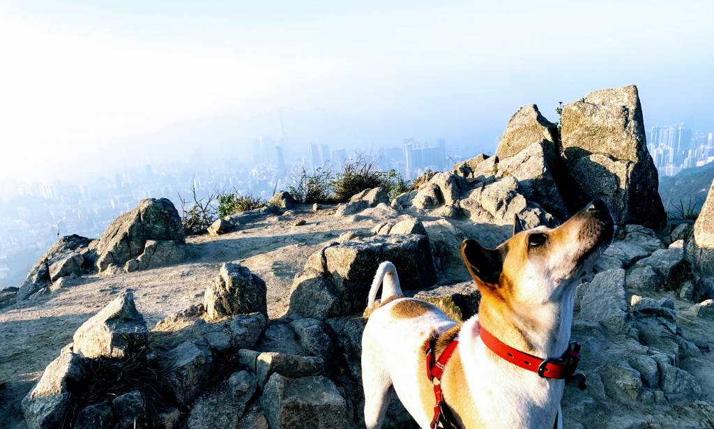 View of Kowloon from lion rock, with a dog