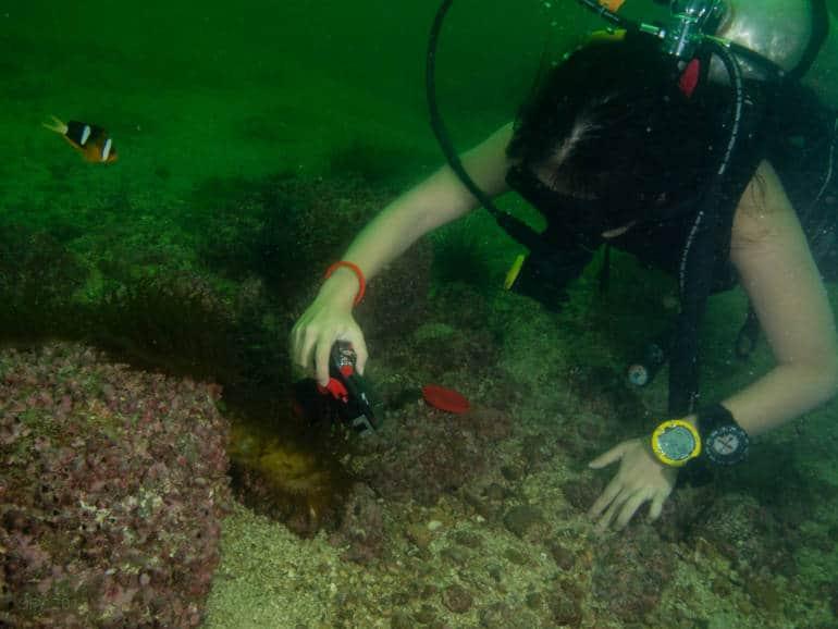 hong kong summer activities scuba diving