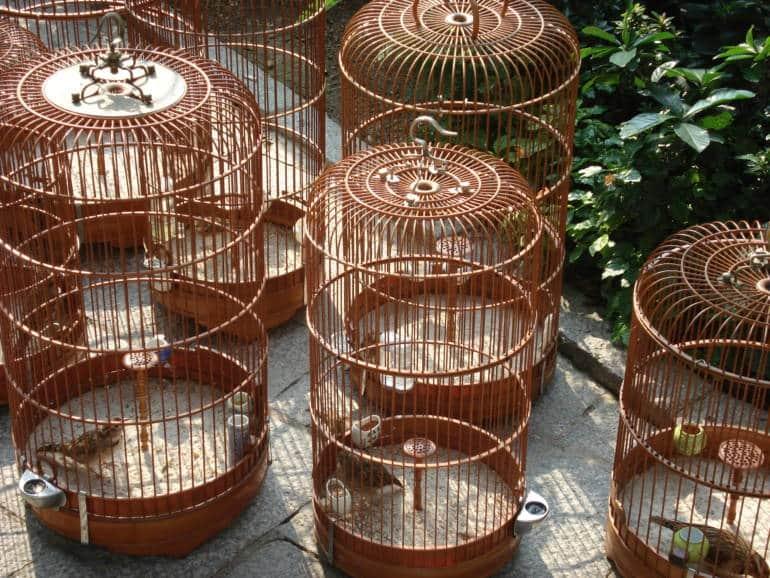 bird garden mong kok
